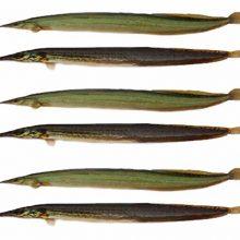 guchi baim fish ( 5-6 pcs/ kg ) 1 kg