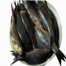 kaliboush captured small ( p ) 1 kg
