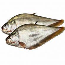 foli fish ( 4-5 kg ) 1 kg